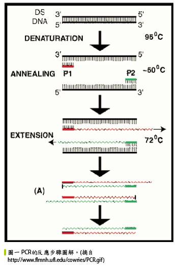 核酸分子结构图谱